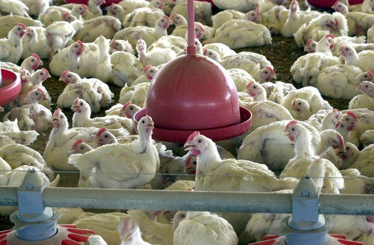 UE planeja barrar frango do Brasil; ministro diz que motivo é comercial