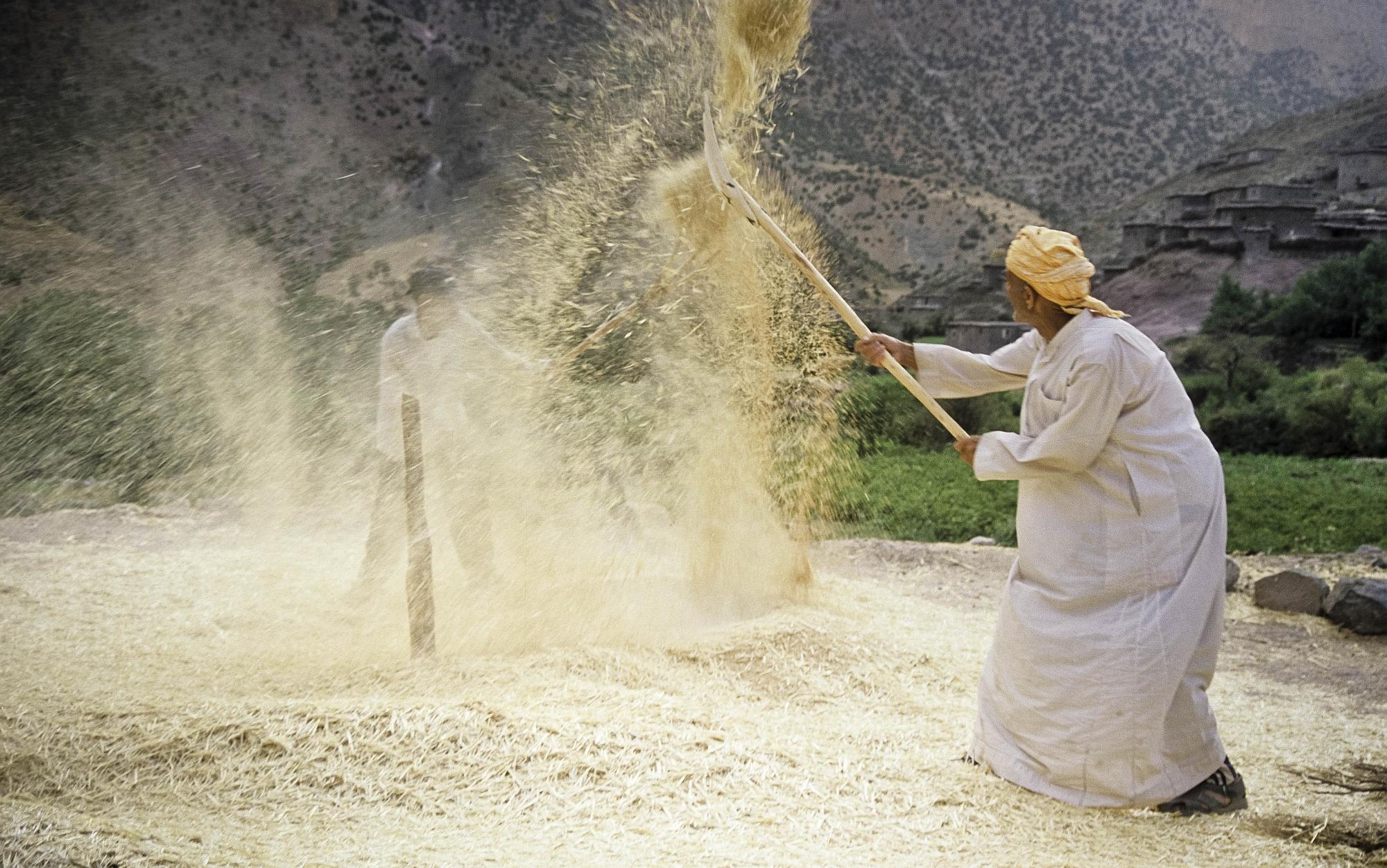 Trigo (foto) e cevada são os principais cereais produzidos no país