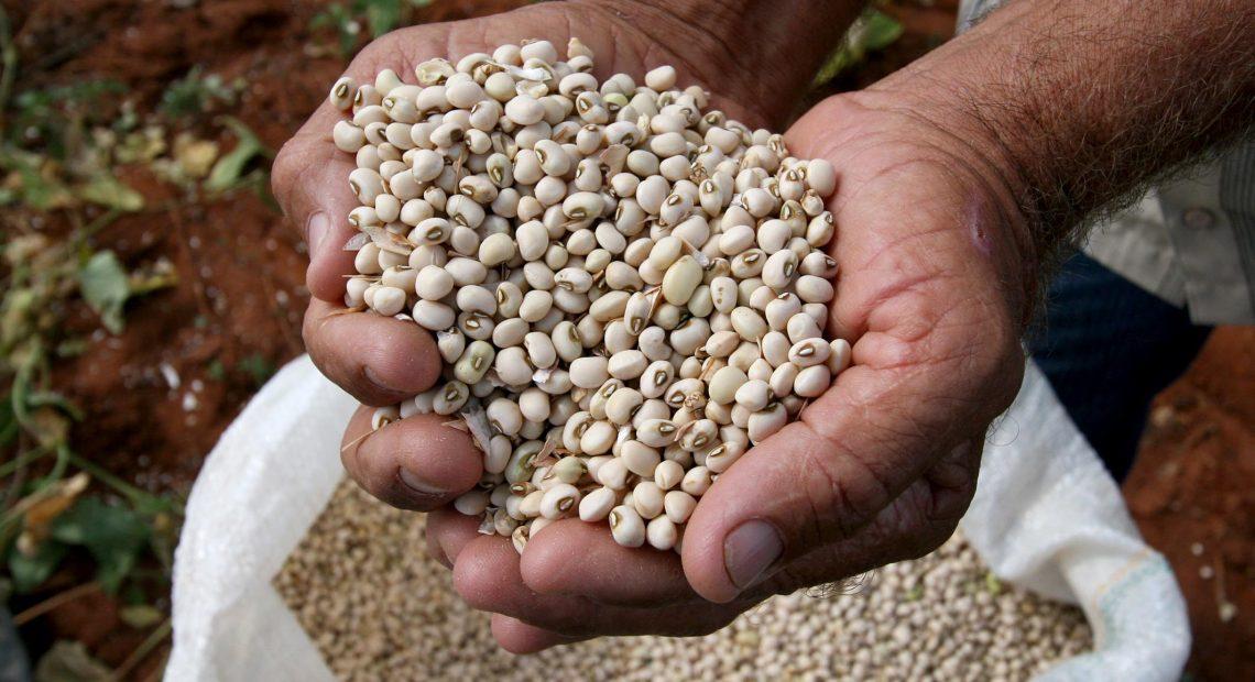 Agricultor mostra feijão produzido na Bahia