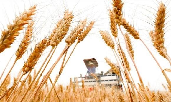 Safra de cereais foi recorde na Argélia