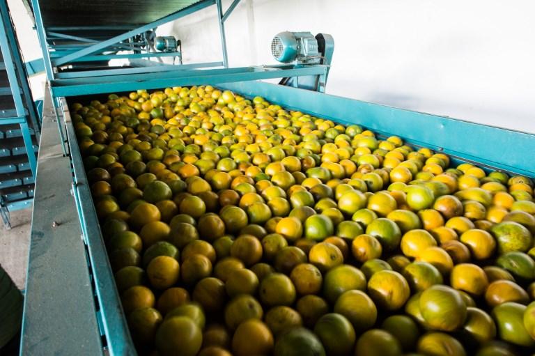 Superávit: aumentaram as exportações de suco de laranja