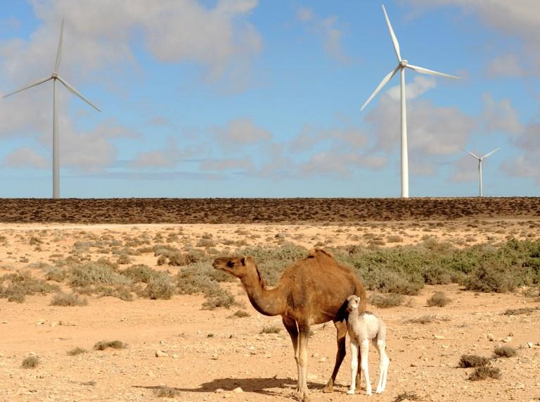 Fontes renováveis: turbinas eólicas no Saara