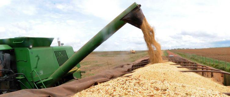 Conab prevê aumento de 4,2% na safra de grãos