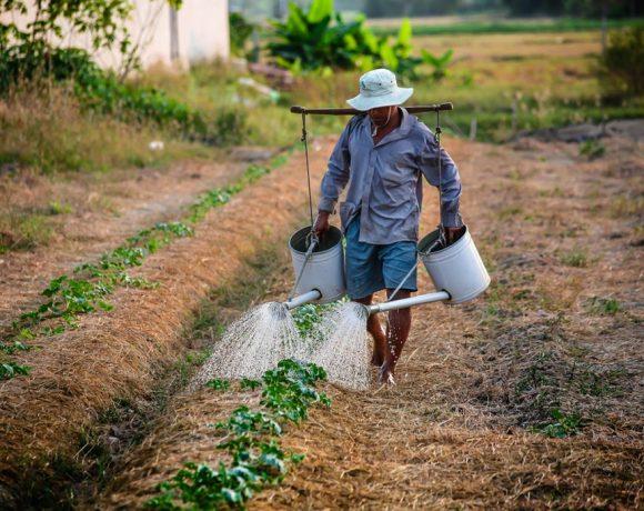 Podem participar indivíduos e empresas do prêmio da FAO