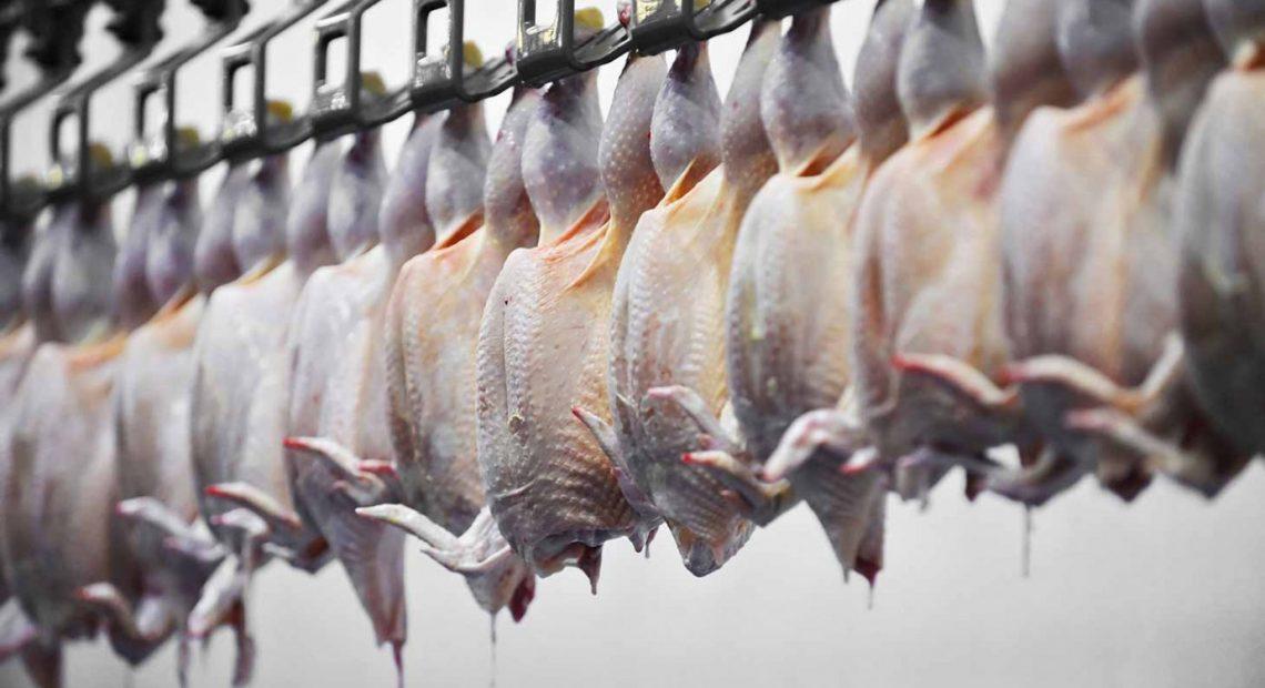 Ano começou com exportação de carne de frango em queda