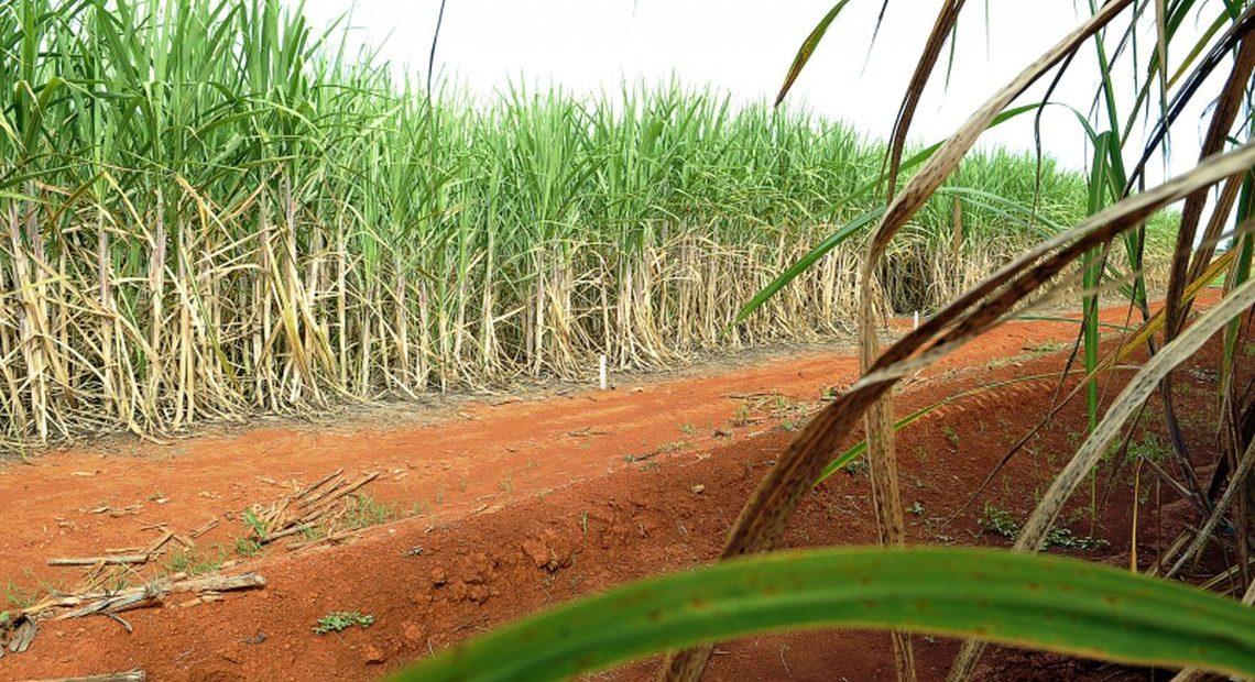 Mais cana foi para a produção de etanol