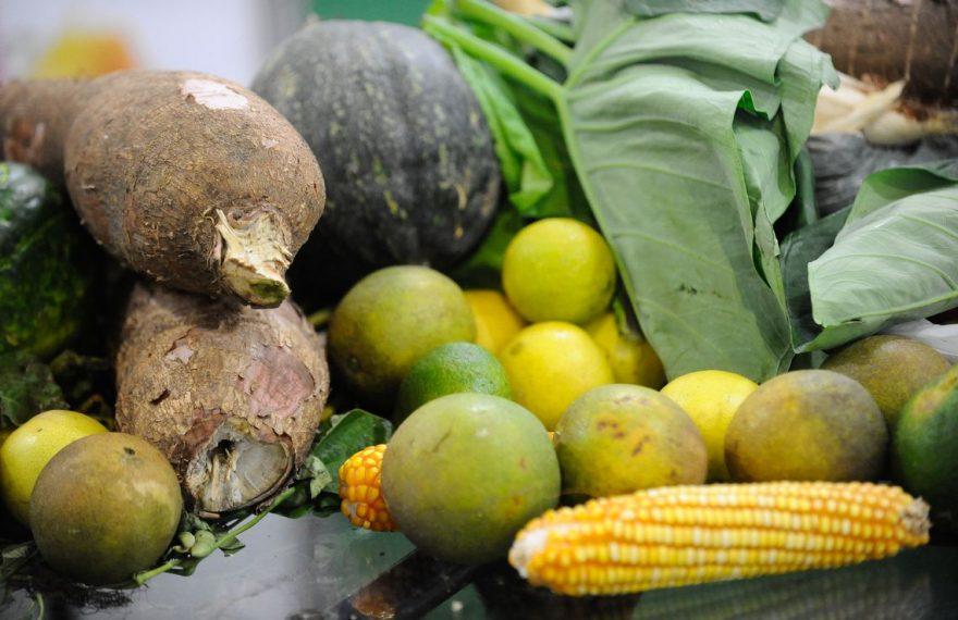 Brasil é líder na produçã de orgânicos na América Latina
