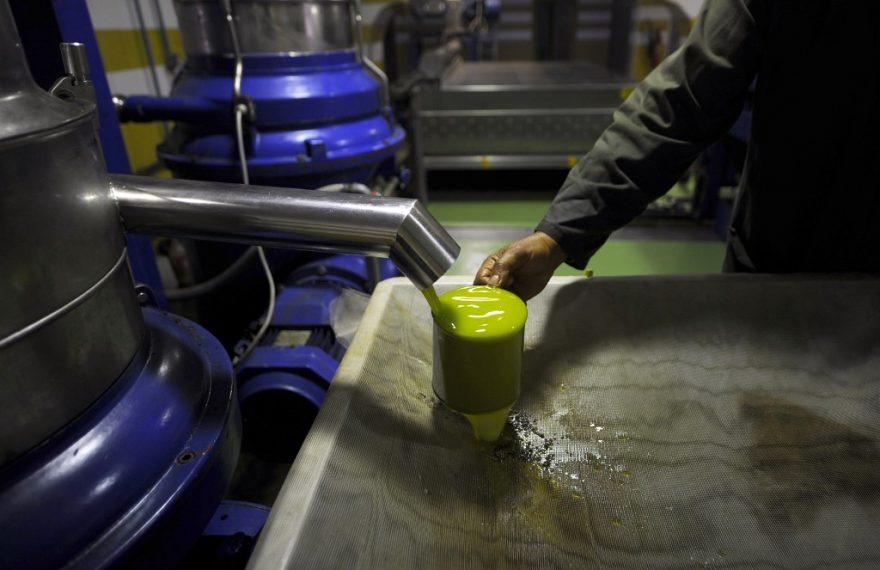Produção de azeite de oliva na Tunísia