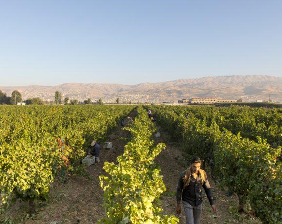 Vinícola Domaine Wardy, no Vale do Bekaa, Líbano