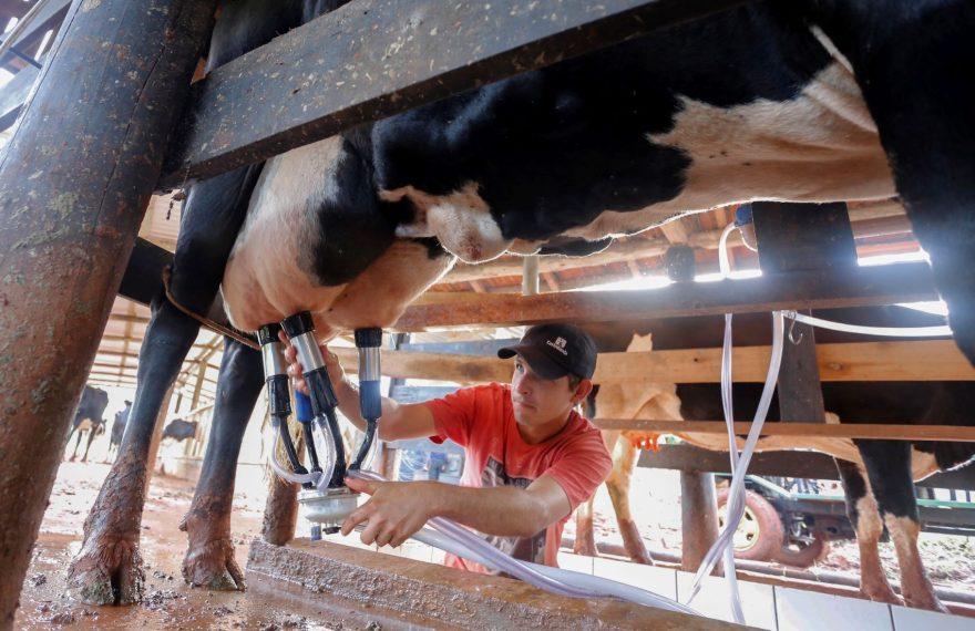 Produção de leite aumentou