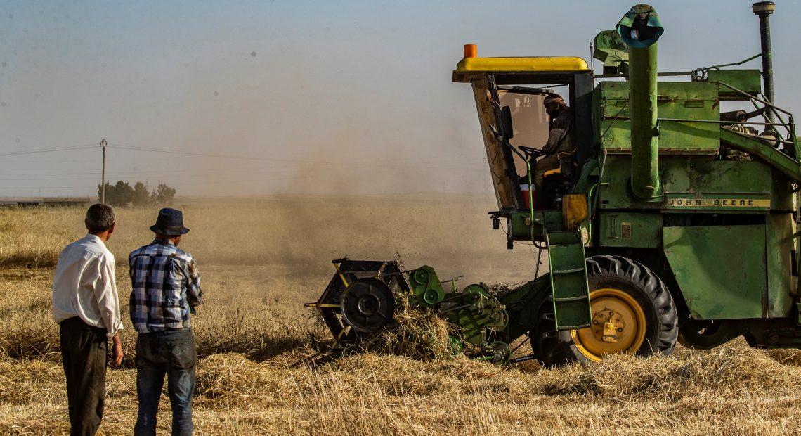 Colheita de trigo na Síria