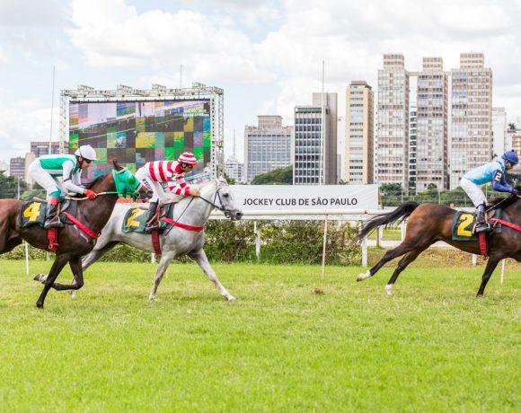 Câmara Árabe patrocinana corrida de cavalos árabes em homenagem aos Emirados Árabes