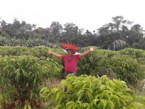 Integração entre café e floresta