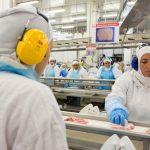 Produção de carne de frango