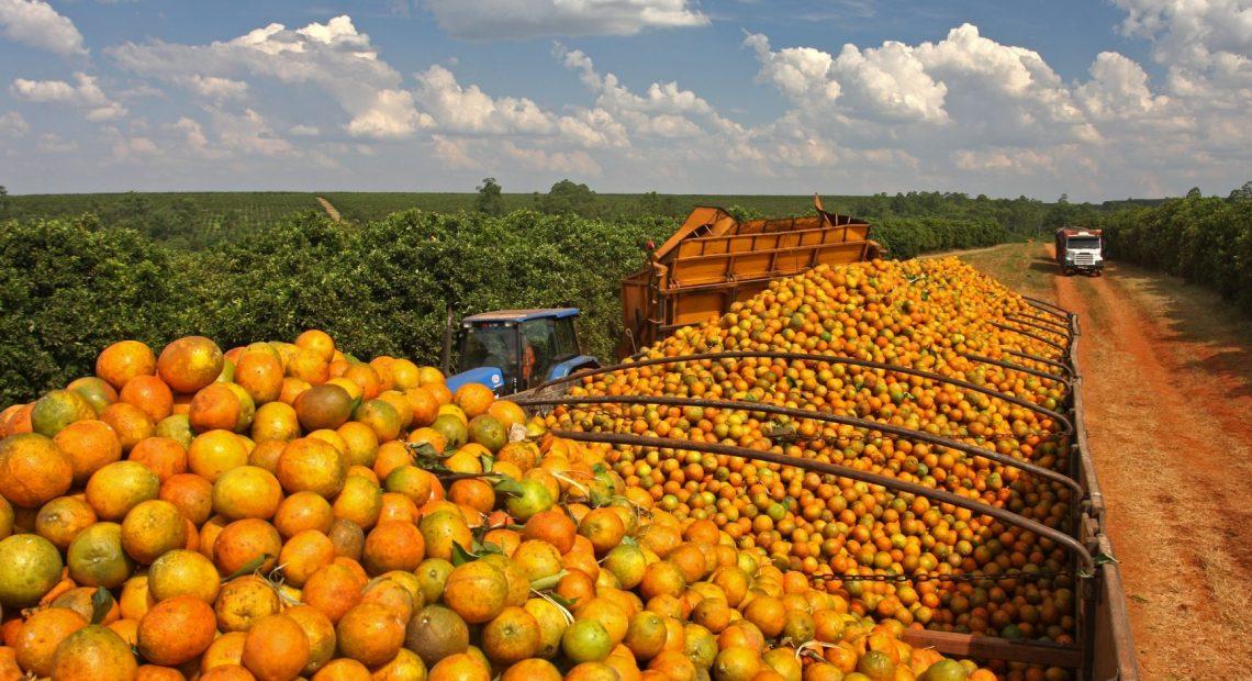 Frutas para fazer suco de laranja